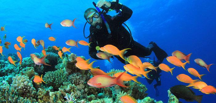 plongeur-poisson-orange