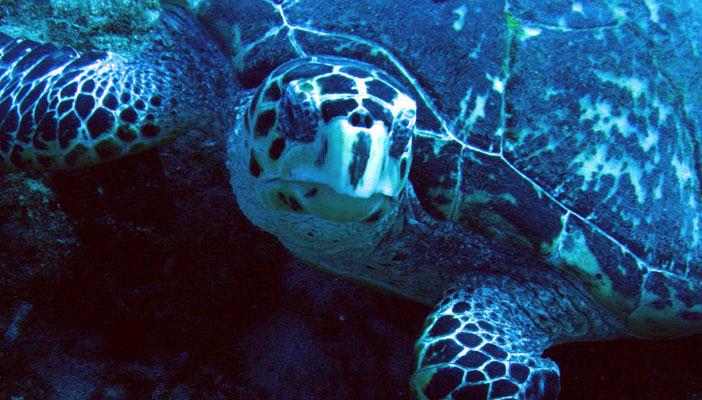 tortue-marine-bouillante