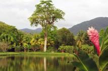 arbre-parc-basse-terre