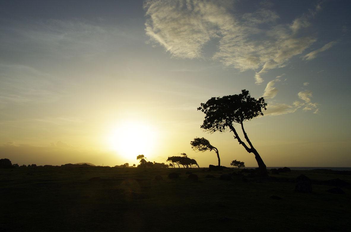 arbres-deforme-vent-sainte-rose