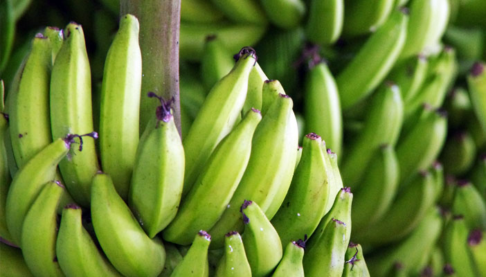 banane-guadeloupe