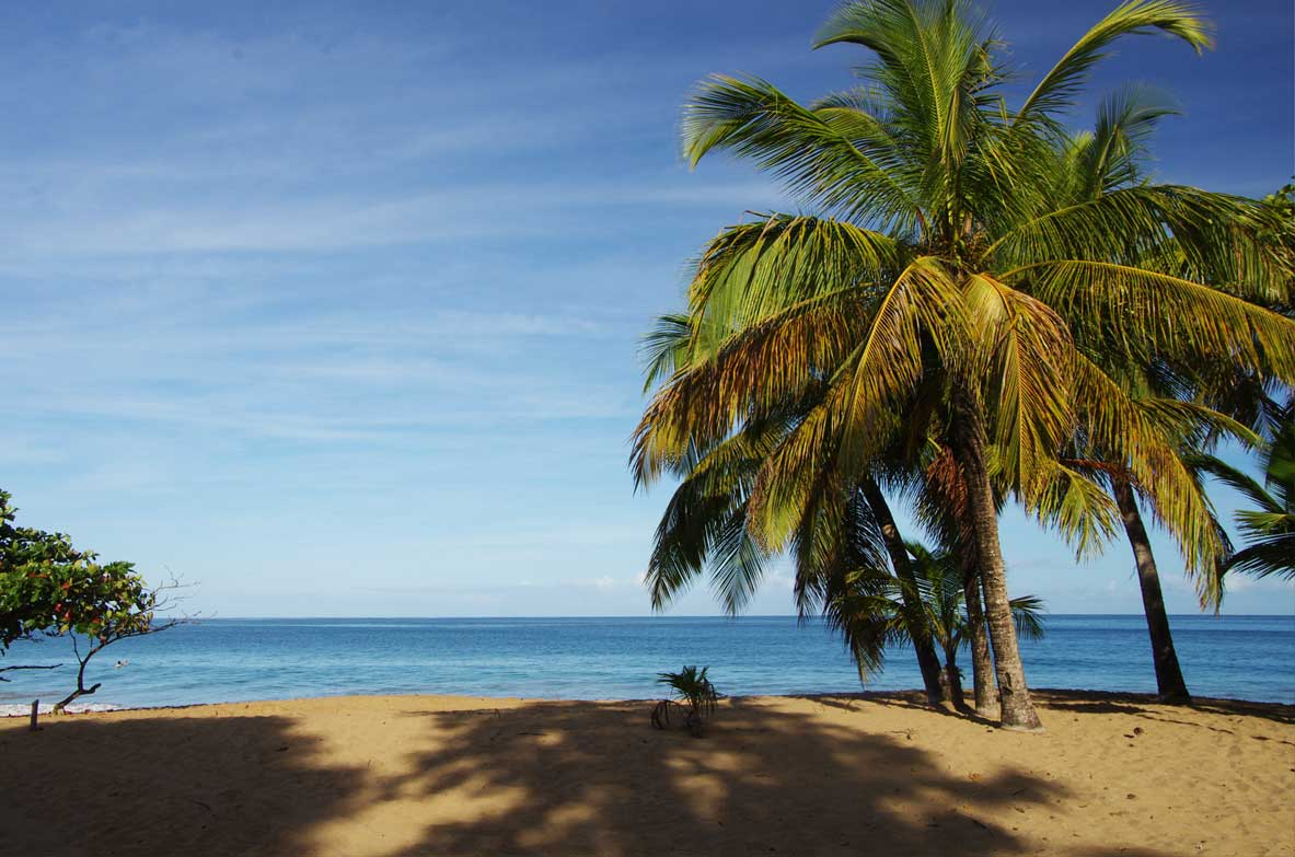 cocotier-plage-guadeloupe