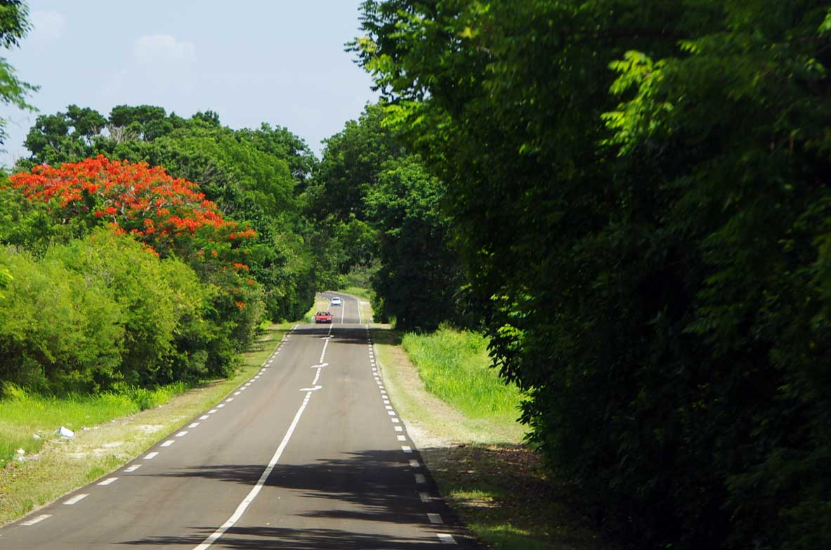 flamboyant-route-voiture-guadeloupe